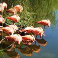 flamin' flamingos