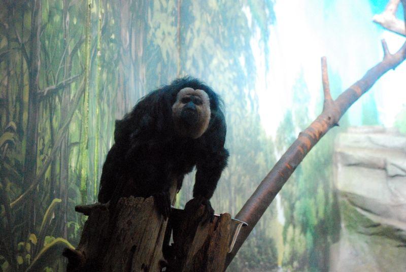 Granby Zoo 4