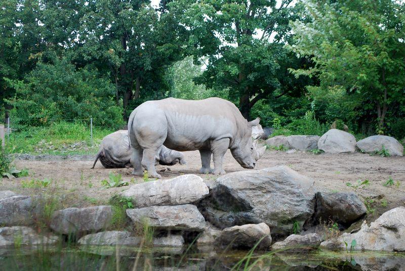 Granby Zoo 11
