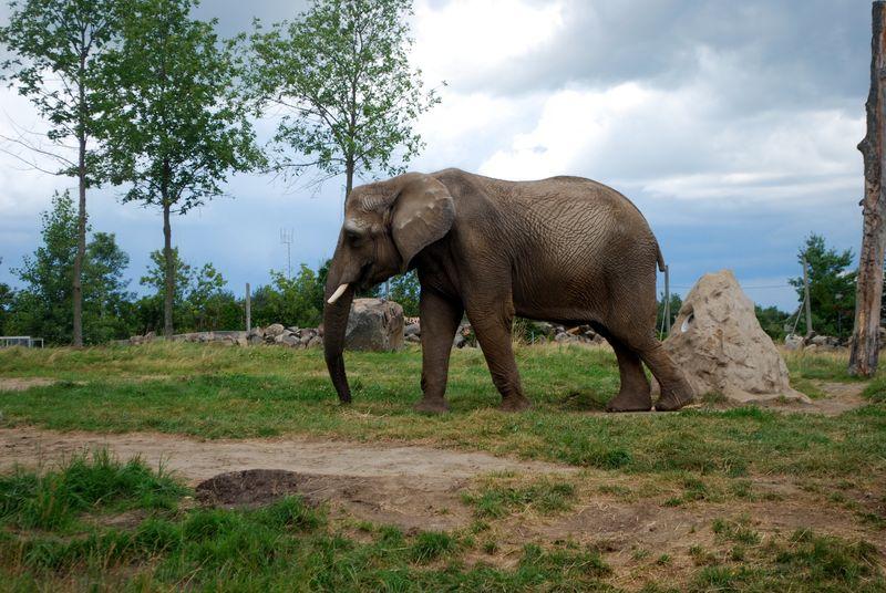 Granby Zoo 13