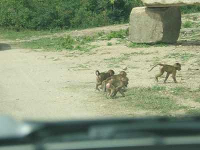 Baby_monkeys