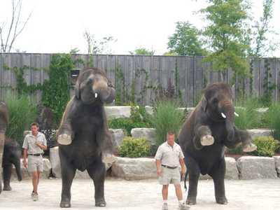 Standing_elephants