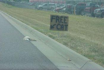 Freecat_2